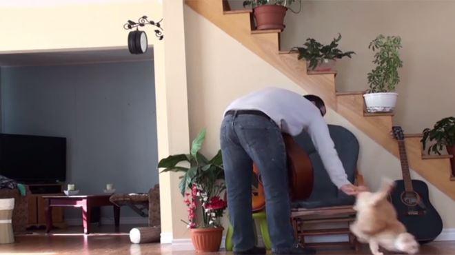 Il vire son chat pour s'asseoir... et va vite le regretter (vidéo) 131