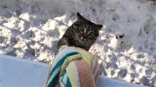 Il a trouvé une technique pour faire rentrer son chat par la fenêtre (vidéo) 96