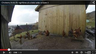 Ces poules sont complètement perturbées par l'éclipse (vidéo) 83
