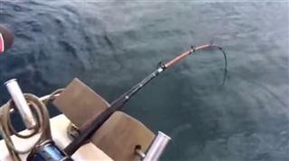 Il pêchait paisiblement quand un invité inattendu est remonté à la surface (vidéo) 58