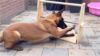 Ce petit jeu pourrait occuper un chien pendant des heures (vidéo) 51