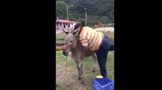 Il tente de monter sur le dos d'un âne, mais il va le regretter (vidéo) 17