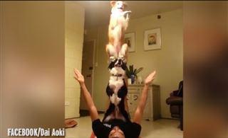 Ces chiens sont de véritables acrobates (vidéo) 33