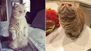 Devinez quelle est la particularité de George le chat? (vidéo et photos) 4