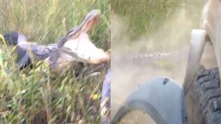 En rentrant chez lui, ce conducteur s'est retrouvé face à un alligator très énervé (vidéo) 6