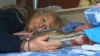 Vicki a préféré un crocodile à son mari- A cinq ans, elle a décidé de venir au lit avec moi (vidéo) 2