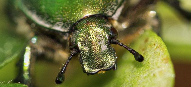 Nous avons d couvert cet insecte dans la cuisine ittre - Insectes dans la cuisine ...