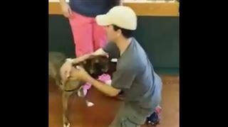 Séquence émotion- un chien se jette dans les bras de son maîtr