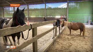 Le centre équestre d'Estaimpuis dévalisé, des enfants ne peuvent monter à poney faute de matériel 2