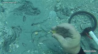 Ce plongeur tombe sur un trésor à 1 million de dollars et laisse éclater sa joie sous l'eau (vidéo) 36