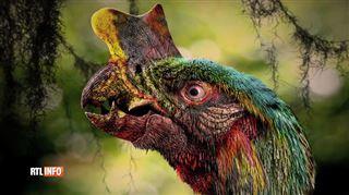 A quoi ressemblera notre Terre dans 10 millions d'années? L'Homme disparaîtra, le monde sera dominé par des grenouilles et des perroquets géants 3