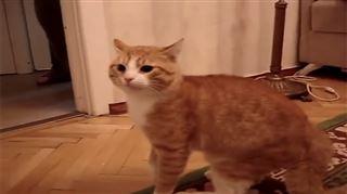 Ce chat pique une colère incroyable et fait le tour du web (vidéo) 27