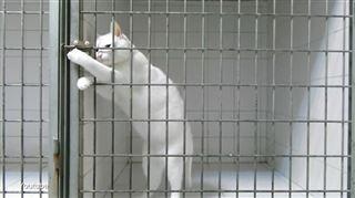 Caméra cachée - ce chat réussi à ouvrir sa cage sans trop de difficultés (vidéo) 6