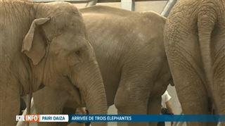 La famille s'agrandit - Pairi Daiza accueille trois éléphantes à la retraite (vidéo) 4