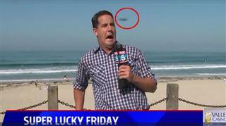 Un insecte terrorise ce journaliste en plein direct (vidéo) 5