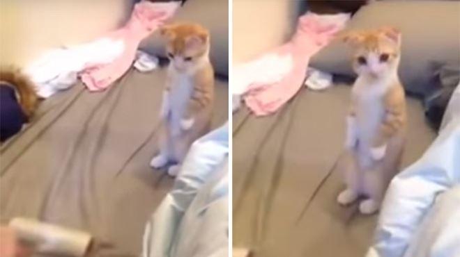 Ce chat observe son maître en train de faire le ménage, sa réaction est toute mignonne (vidéo) 1