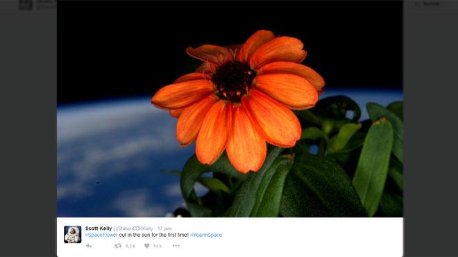 Voici la première fleur cultivée dans l'espace: comment est-ce possible?