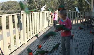 Magnifique- chaque matin, ces deux fillettes et leur papa nourrissent les dizaines de perroquets qui les entourent (vidéo) 2