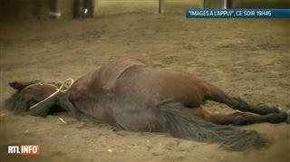 Benoît et son père ont acheté une jument sur un site de seconde main- Après à peine trois tours de piste, le cheval est tombé raide mort 5